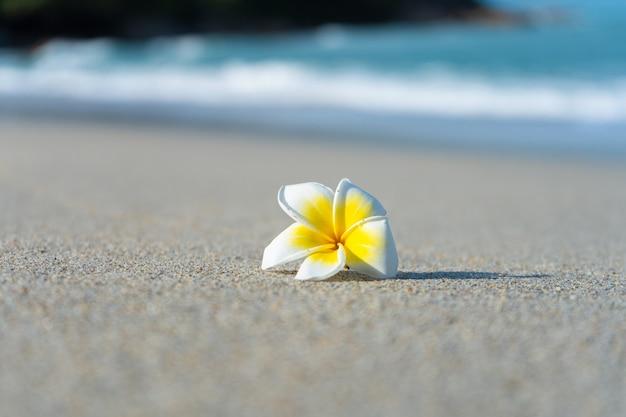 Цветок frangipani на пляже на фоне моря. отдых в тропиках. спокойствие и отдых у моря