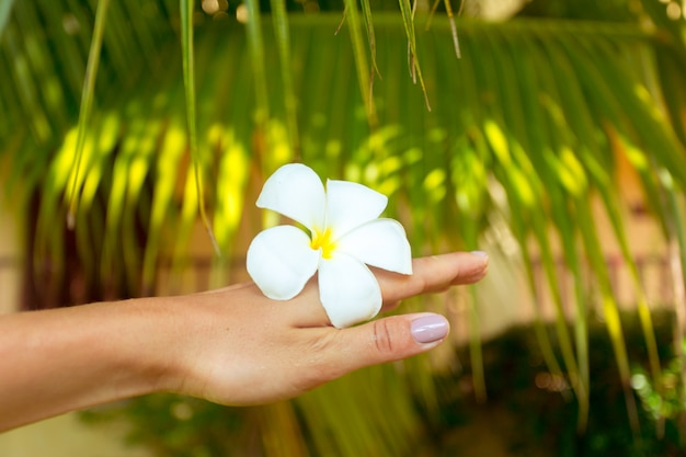 Frangipani flower in a woman's hand