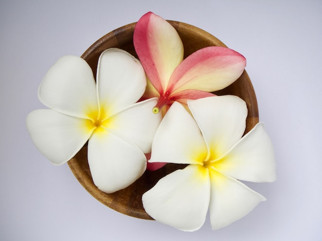 Frangipani flower in wooden bowl isolated on white background