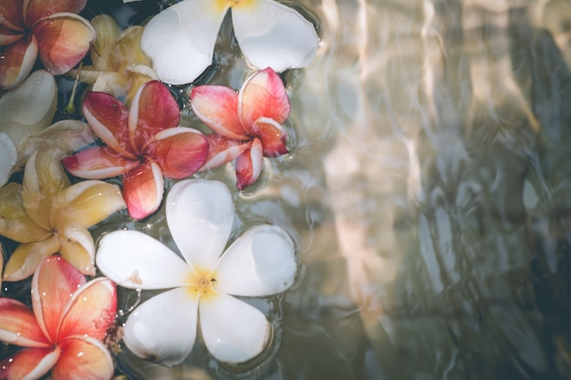 Frangipani flowers colorful tropical scent on water treatment in the health spa is illustr