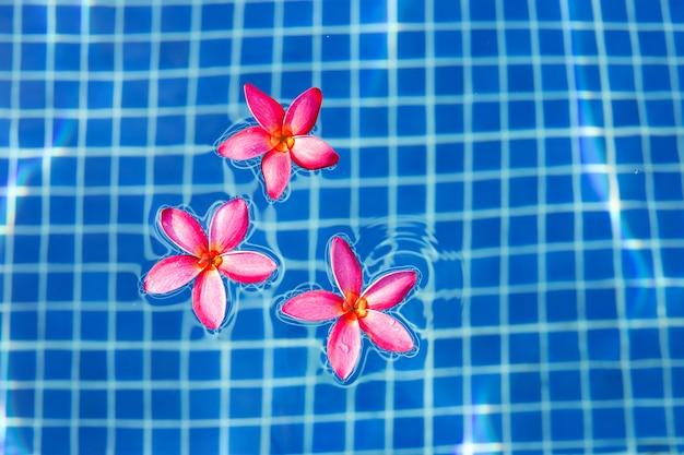 スイミングプールのフランジパニの花。上面図
