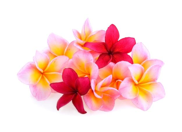 フランジパニの花は、白い背景で隔離