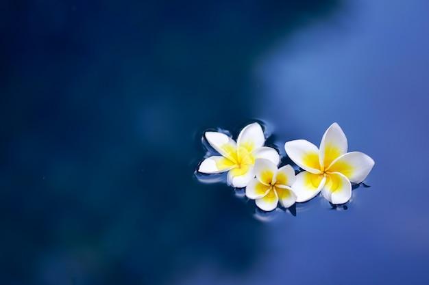 水面にフランジパニの花