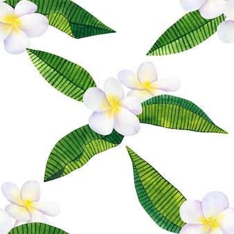 フランジパニまたはプルメリア。白い花と緑の熱帯の葉。手描きの水彩イラスト。シームレスパターン。孤立。