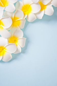 Frangipani plumeria flowers on the blue background. copy space. top view. tropical composition.
