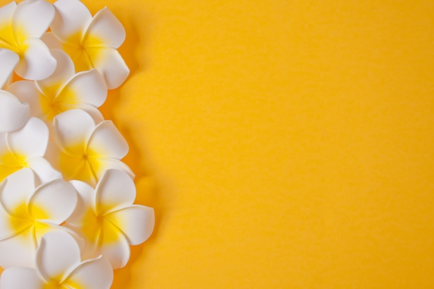 Frangipani plumeria flowers on the yellow background. copy space. top view. tropical composition.