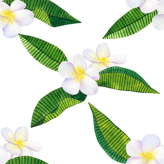Frangipani or plumeria. white flowers and green tropical leaves. hand drawn watercolor illustration. seamless pattern. isolated.