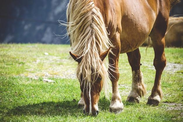 Вольная лошадь пиренеев ест на лугах