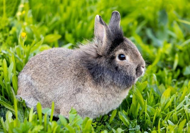 緑の草の中の無料のウサギ