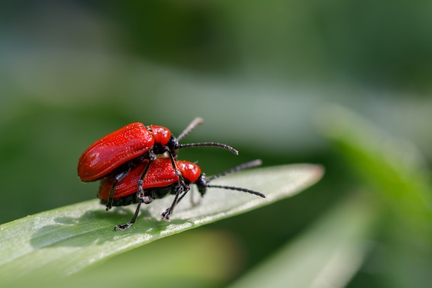 散歩中の昆虫カブトムシの自由な関係