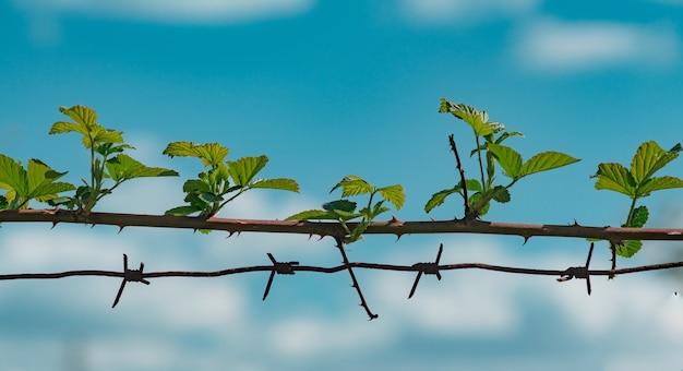 자유 개념입니다. 가시 철사와 가시 줄기입니다. 원활한 가시 식물 줄기입니다.
