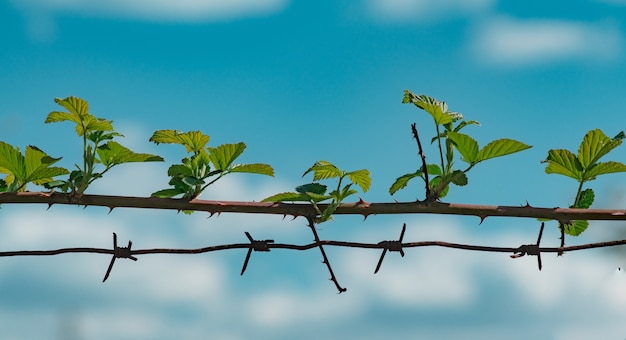 Freedom concept. barbed wire and thorny stem. seamless thorny plants stems.
