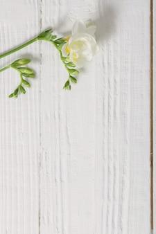 白い木製の背景にフリージアの花