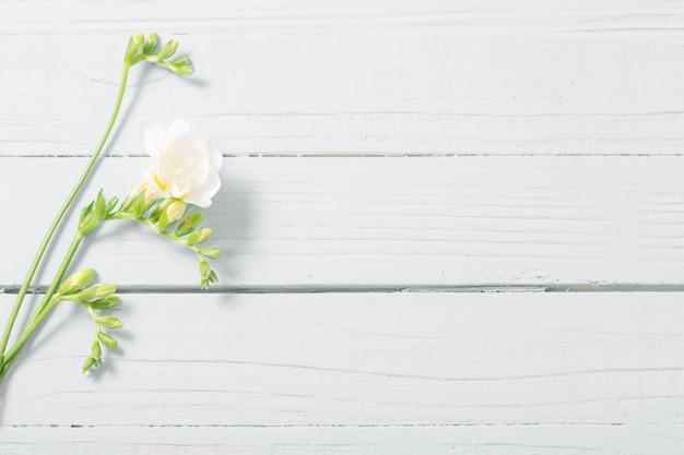 Цветы фрезии на белой деревянной поверхности