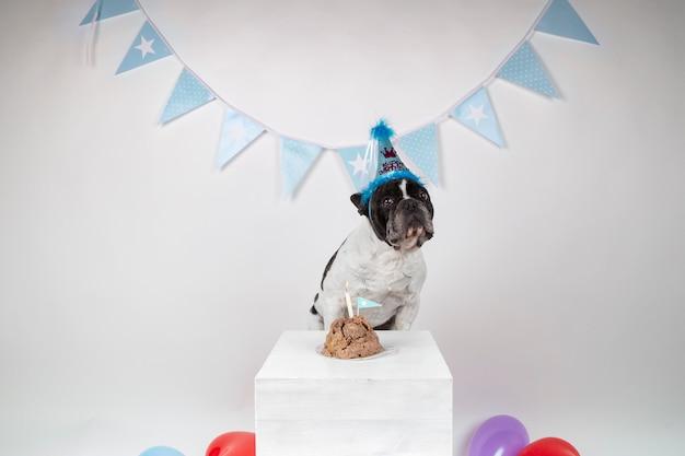 白い背景の上の彼の誕生日を祝っているフレンチブルドッグ