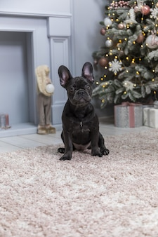 French bulldog dog sitting on fur blanket in front of pink and white decorated christmas tree in blurry wall.