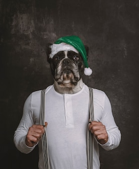 French bulldog head portrait with green christmas hat on the body of a man with braces