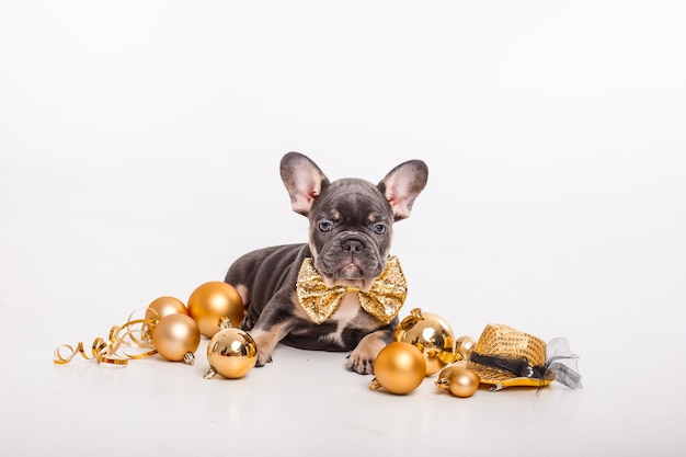 French bulldog puppy in a gentleman's carnival butterfly with christmas tree toys isolated on white, new year