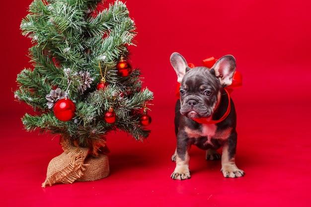 레드에 고립 된 크리스마스 트리 근처 프랑스 불독 강아지