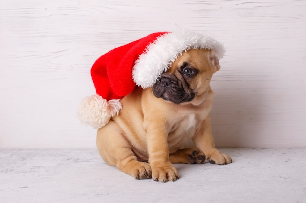 French bulldog puppy in santa claus hat