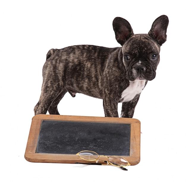 黒い学校のスレートとフレンチブルドッグの子犬