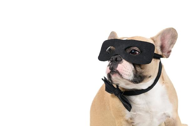 フレンチブルドッグは、白い壁、ペット、動物のコンセプトで隔離のスーパーヒーローマスクを着用します。
