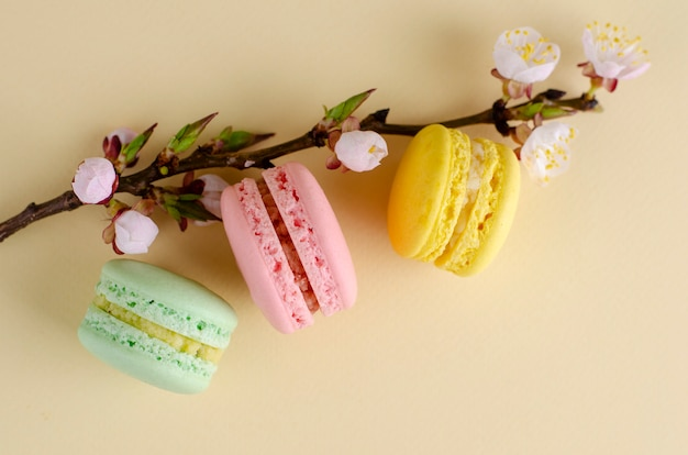 French colorful macarons or macaroons with blooming apricot tree flowers on pastel beige
