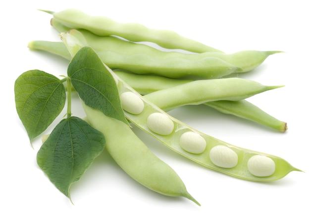 白い背景の葉を持つフランスのサヤインゲン野菜