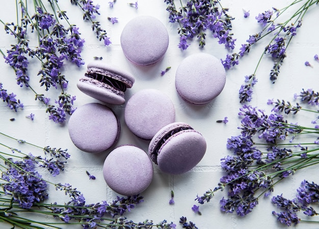 French macarons with lavender flavor and fresh lavender flowers on a white tile background
