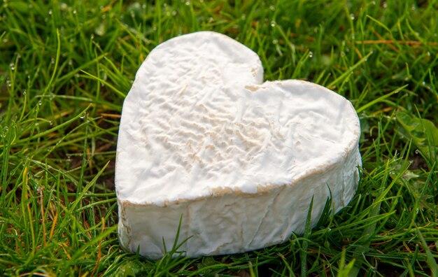 Французский сыр невшатель на траве