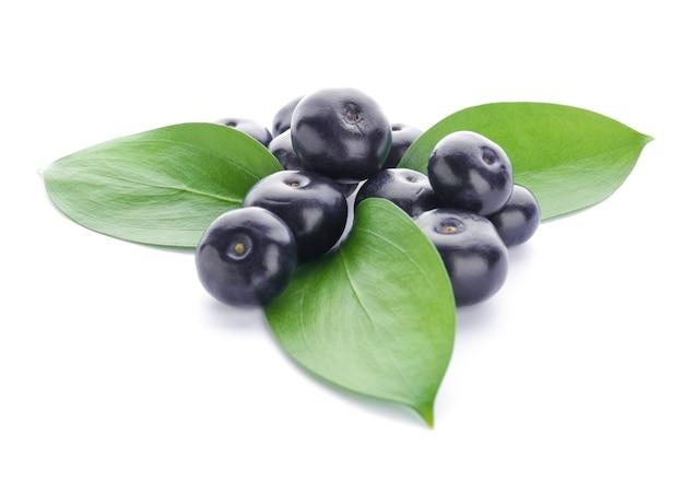 화이트에 신선한 아카이 열매