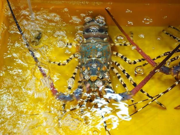 黄色い水タンクの新鮮な生きているロブスター、市場での新鮮なシーフードの販売