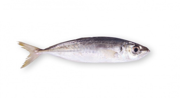 Fresh anchovy on white