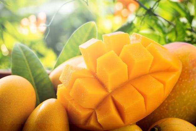 자연 배경에 대나무 바구니에 신선 하 고 아름 다운 망고 열매, 텍스트에 대 한 빈 공간 (텍스트 공간) 복사.