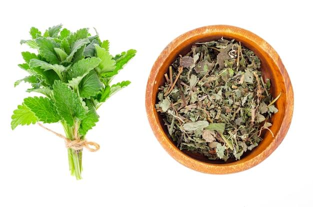 Свежая и сушеная трава мелисса лекарственная. фото