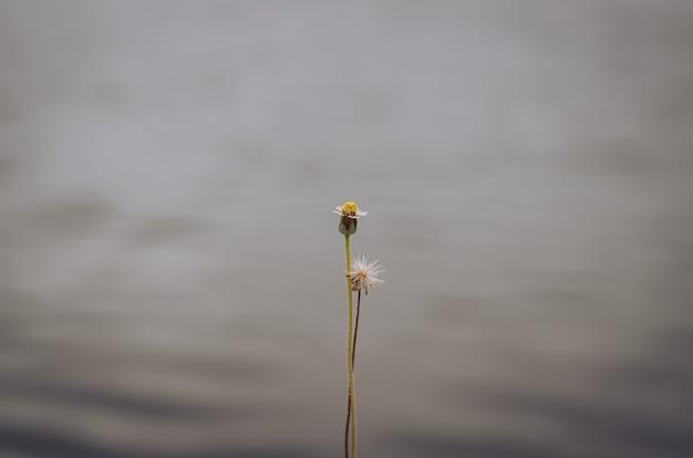 Цветки свежей и сухой травы с запачканным озером.