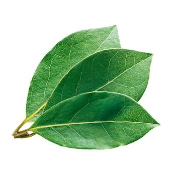 新鮮で緑の月桂樹の葉