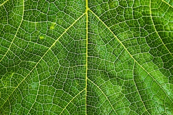 Fresh and green tree leaf texture background for world earth day concept.
