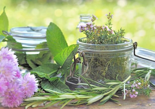 Свежее ароматическое растение в стеклянной банке на столе в саду