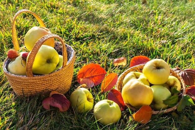 草の上のバスケットの新鮮な秋のリンゴ