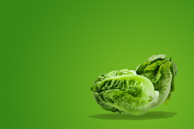 Fresh baby cos lettuce on green background