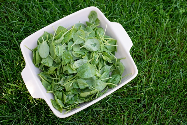 Свежие молодые листья шпината на миске