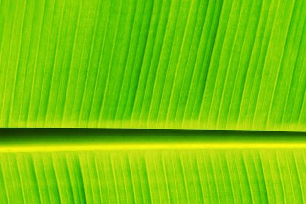 Свежий банановый лист
