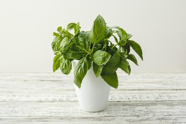 대체 의학 가정 정원을 위한 나무 탁자에 있는 흰색 냄비에서 자라는 신선한 바질 허브