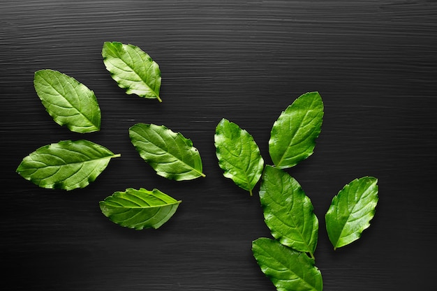 Fresh basil leaves over a black background and copy space.