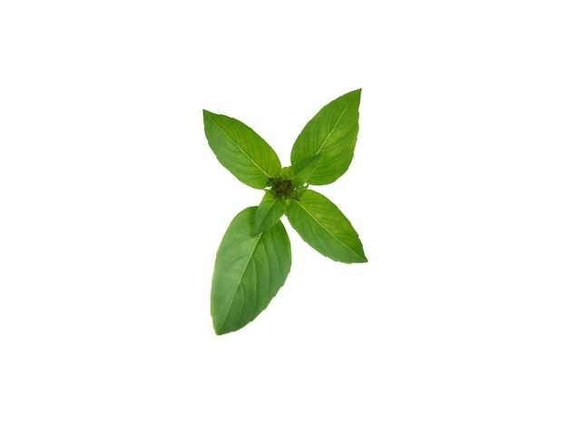 白い背景で隔離の新鮮なバジルの葉