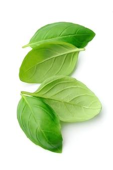 Fresh basil leaves isolated on white background .
