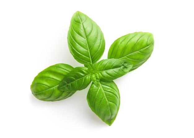 Fresh basil leaves isolated on white.