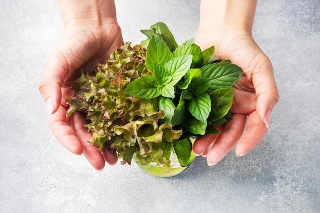 新鮮なバジルの葉、ミント、レタス。香りのよいハーブとスパイスと女性の手の花束。