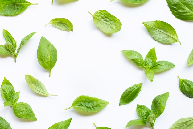 Fresh basil leaves on white. background